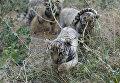 Тигрята в сафари-парке Тайган в Крыму