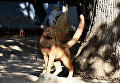 Кот ученый из поэмы Руслан и Людмила А. Пушкина в Детском парке Симферополя