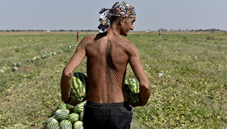 Сбор арбузов в Сакском районе Крыма