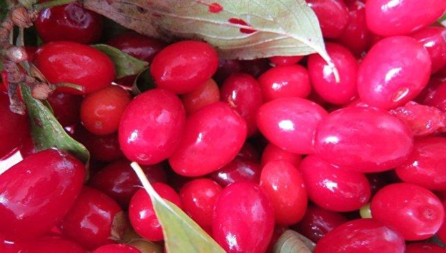 ВКрыму пресекли ввоз зараженных яблок икартофеля из Украинского государства