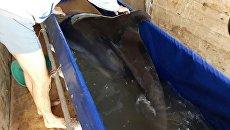 Сотрудники Погрануправления ФСБ России по РК задержали грузовик, в котором незаконно перевозили дельфинов