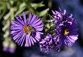 Пчела на цветке в Ботаническом саду Крымского федерального университета им.Вернадского в Симферополе