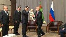 Путину подарили щенка алабая по кличке Верный