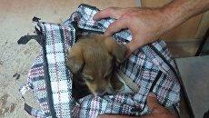 Щенок, которого не пропустили через границу в Крым с Украины