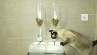 Скриншот с видео о работе тренажера для домашних кошек, который защитит животных от ожирения