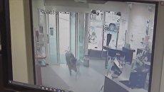 Скриншот с видео в YouTube о нападении диких кабанов на жителей немецкого города Хайде