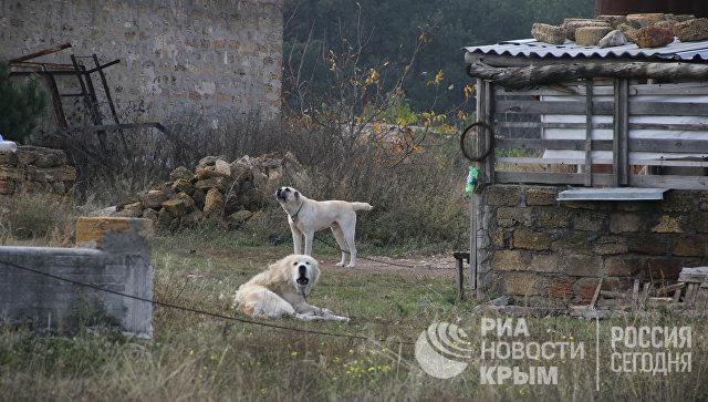 Самозахваты на поляне протеста в районе микрорайона Пневматика в Симферополе