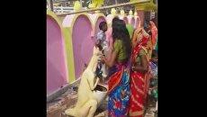 Жители деревни в Индии приняли мусорную урну за фигуру божества