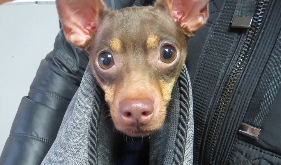 Россельхознадзор непропустил вКрым сУкраины грустную собаку
