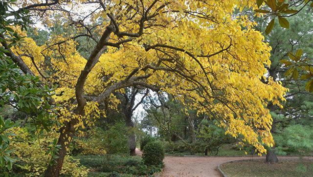 Парк Монтедор в Никитском ботаническом саду