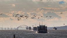 Наблюдение за экосистемой в зоне строительства моста через Керченский пролив