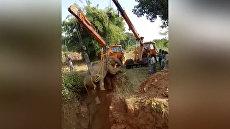 Индийские спасатели подъемными кранами вытащили упавшую в яму слониху