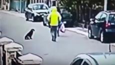 В Черногории бездомная собака спасла женщину от грабителя