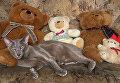 Кот породы ориентал Семга. Домашнее животное сотрудников регионального подразделения МИА Россия сегодня в Симферополе