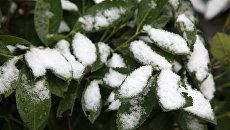 Снег в Севастополе. 6 декабря 2017