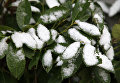Снег в Севастополе. Архивное фото