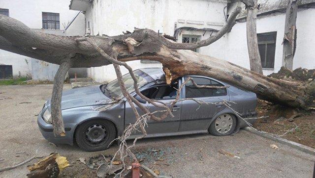 В Севастополе упавшее дерево придавило машину