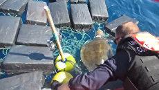 Черепаха застряла в океане среди тюков с кокаином на 53 млн долларов