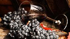 Виноградная лоза и вино в бокале на винодельческом предприятии Массандра