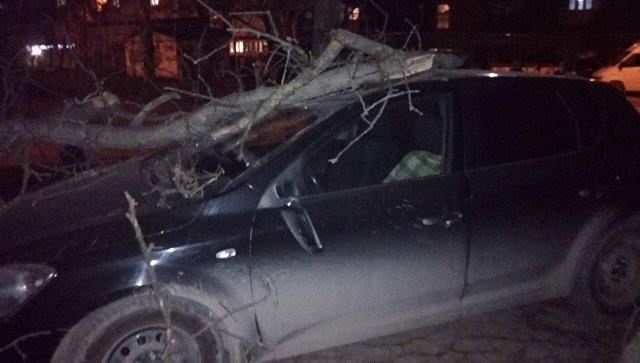 Ветер в Симферополе повалил дерево на машину