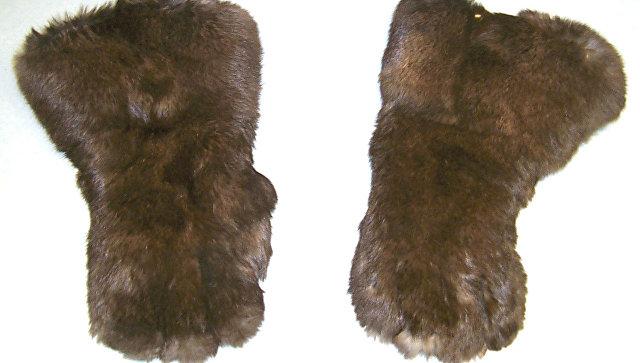 Подаренные Иосифом Сталиным Франклину Рузвельту рукавицы из медвежьей шерсти