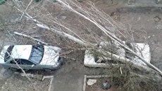 В Севастополе из-за штормового ветра дерево упало на машины