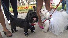 Десятки владельцев кошек и собак устроили питомцам пышную свадьбу в Лиме