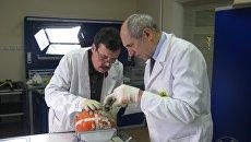 Специалисты Межгосударственного авиационного комитета проводят работы по вскрытию черных ящиков