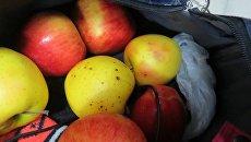 Яблоки, которые украинцы пытались провезти через границу с Крымом