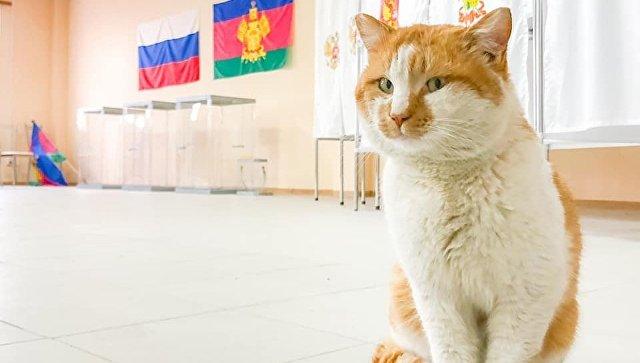 Кот Мостик сменил строительный участок наизбирательный