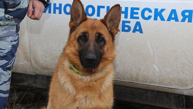 Служебная собака по кличке Юта