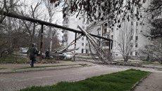Поваленное дерево в Севастополе