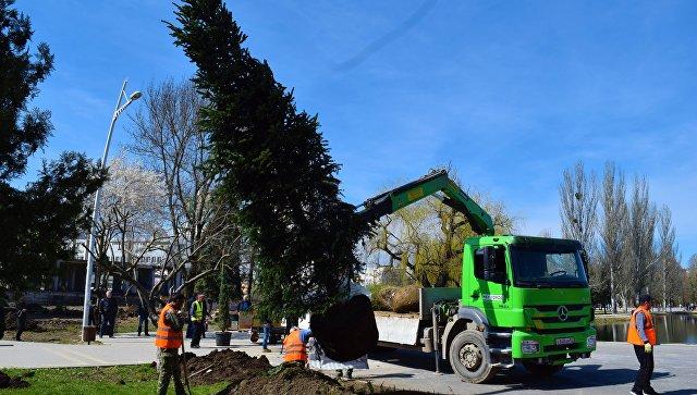 Высадка новых деревьев в Симферополе