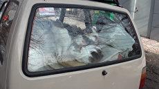 КОТечная остановка: уфимец превратил старую Оку в приют для бездомных кошек