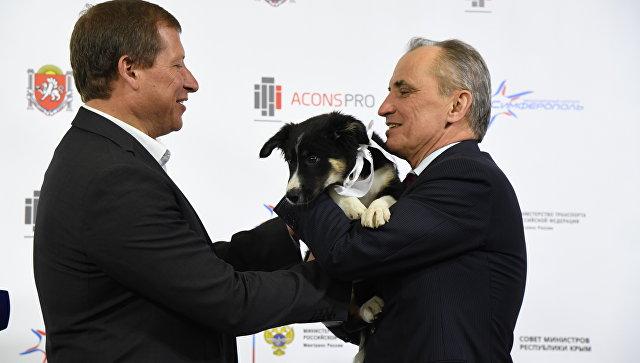 Подрядчик нового терминала подарил аэропорту Симферополя щенка Алису